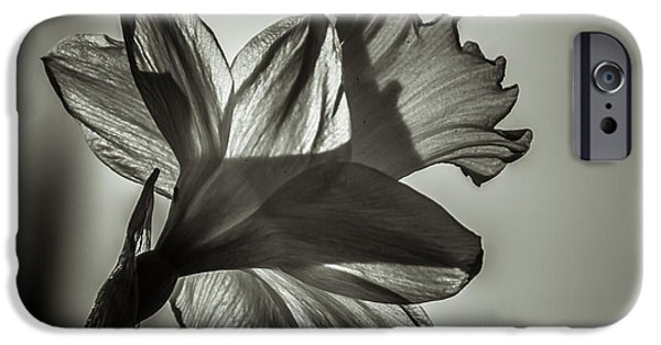 Close Up Floral iPhone Cases - Delicate iPhone Case by Chris Fletcher