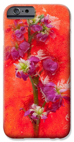Contemporary Abstract iPhone Cases - Delicate creations iPhone Case by Zina Zinchik