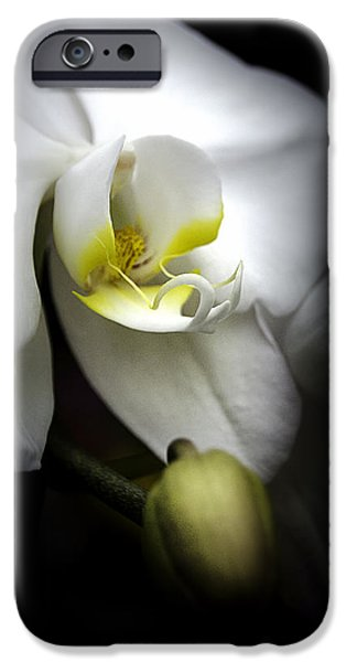 White Orchid iPhone Cases - Delicate Exotic Orchid iPhone Case by Julie Palencia