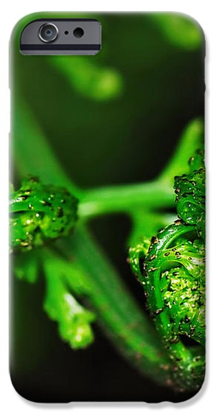 Delicate Fern Unfolding iPhone Case by Kaye Menner