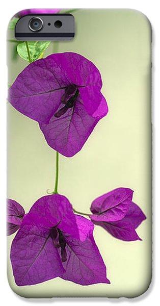 Delicate Flowers Pretty in Pink iPhone Case by Natalie Kinnear