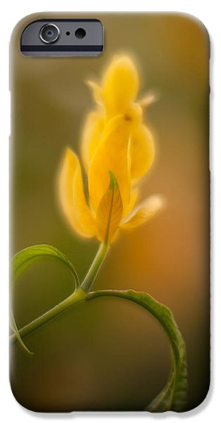 Thin iPhone Cases - Delicate Fountain of Gold iPhone Case by Mike Reid
