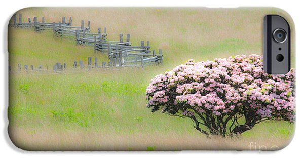 Surreal Landscape iPhone Cases - Delicate Meadow - a Tranquil Moments Landscape iPhone Case by Dan Carmichael