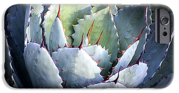 Rosette iPhone Cases - Desert Artichoke Agave iPhone Case by Julie Palencia