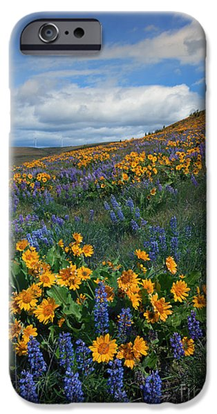 Meadow iPhone Cases - Desert Color iPhone Case by Mike  Dawson