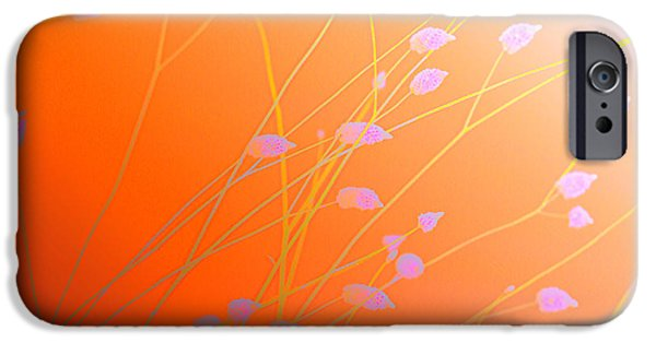 Florals iPhone Cases - Desert Flowers iPhone Case by Holly Kempe