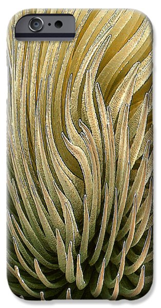Desert Green iPhone Case by Ben and Raisa Gertsberg