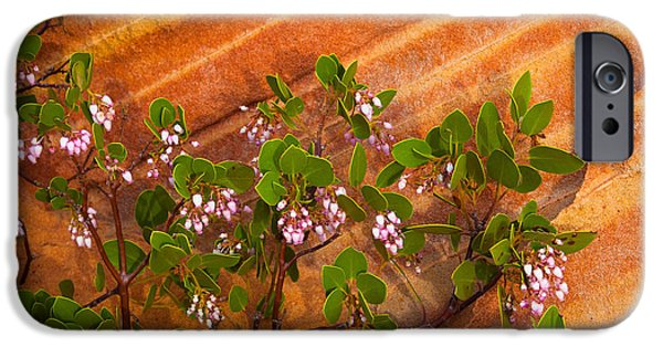 Harsh iPhone Cases - Desert Manzanita iPhone Case by Inge Johnsson