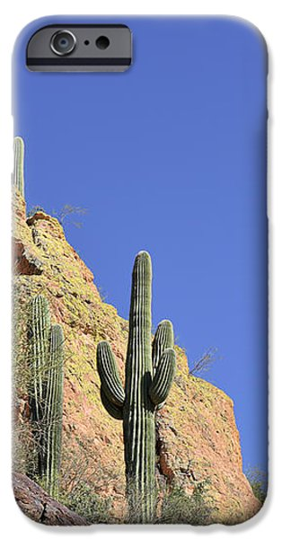 Desert Plants of The Superstitions iPhone Case by Christine Till