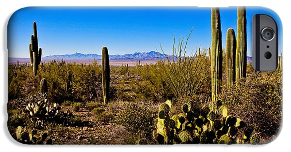 Winter iPhone Cases - Desert Spring iPhone Case by Chad Dutson