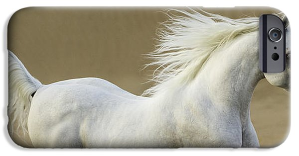 Horse iPhone Cases - Desert Stallion Runs iPhone Case by Carol Walker