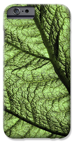 Designs In Nature iPhone Cases - Design In Nature iPhone Case by Aidan Moran