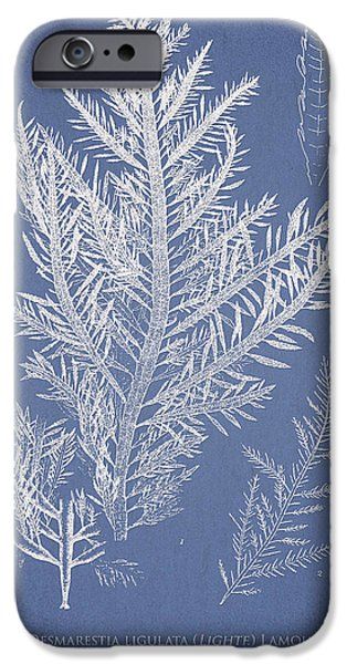 Desmarestia ligulata iPhone Case by Aged Pixel