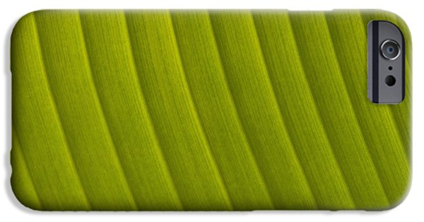 Simple Beauty In Colors iPhone Cases - Detail Of Leaf Marrakech, Morocco iPhone Case by Ian Cumming