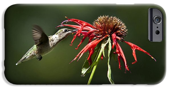 Hummingbird iPhone Cases - Determination iPhone Case by Christina Rollo
