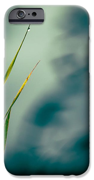 Dew Drop iPhone Case by Bob Orsillo