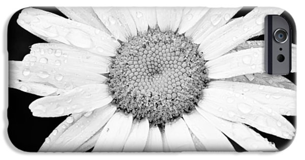 Wet Petals iPhone Cases - Dew Drop Daisy iPhone Case by Adam Romanowicz