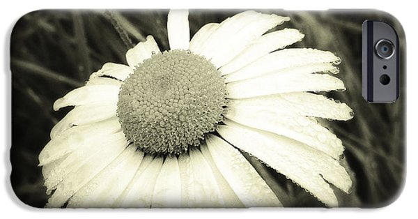 Daisy iPhone Cases - Dew drops  iPhone Case by Les Cunliffe