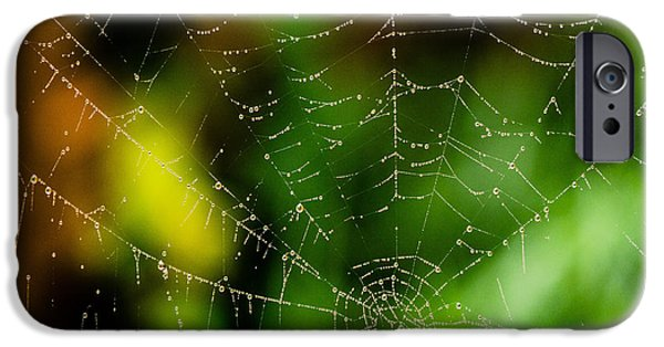 United States iPhone Cases - Dew drops on Spider web 2 iPhone Case by Tracy Knauer