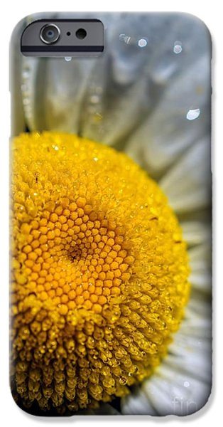 Disc iPhone Cases - Sunshine Of Your Love - Daisy iPhone Case by Henry Kowalski