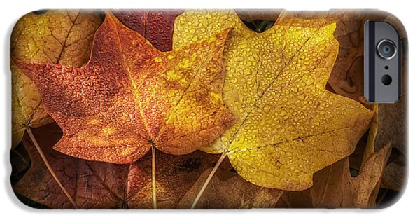 Leaf Change iPhone Cases - Dew on Autumn Leaves iPhone Case by Scott Norris