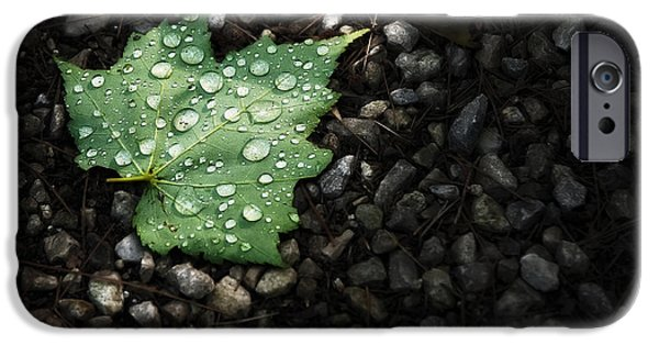 Beads iPhone Cases - Dew on Leaf iPhone Case by Scott Norris