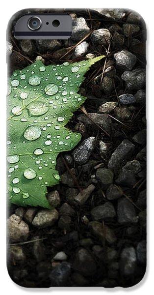 Dew on Leaf iPhone Case by Scott Norris