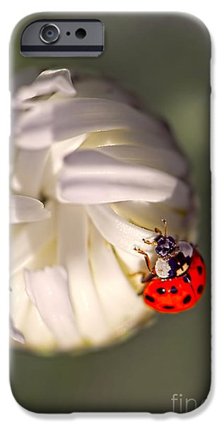 Daisy Bud iPhone Cases - Dewdrop Ladybug iPhone Case by Sharon  Talson