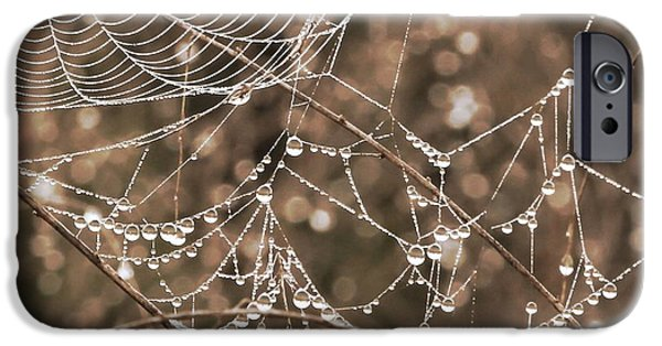 Snake iPhone Cases - Dewdrop Web in Sepia iPhone Case by Carol Groenen