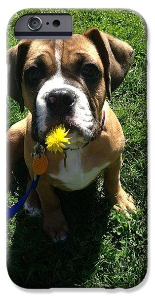 Dexter Puppy iPhone Case by Carolyn Hartmann
