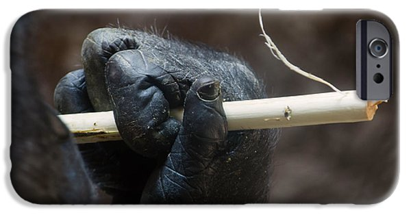 Smithsonian National Zoological Park iPhone Cases - Dexterity iPhone Case by Rebecca Sherman