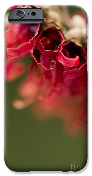 Green Witch iPhone Cases - Diana the Hamamelis iPhone Case by Anne Gilbert