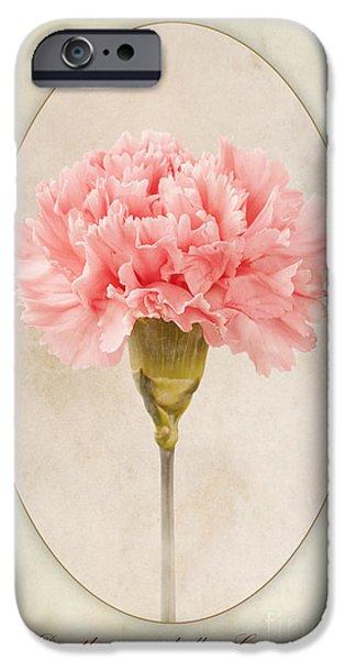 Flora iPhone Cases - Dianthus caryophyllus Carnation iPhone Case by John Edwards