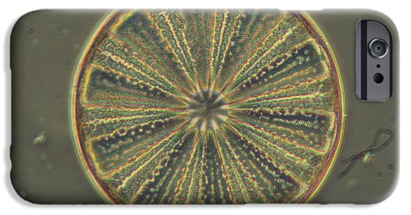 Diatoms iPhone Cases - Diatom - Arachnodiscus iPhone Case by James W. Evarts