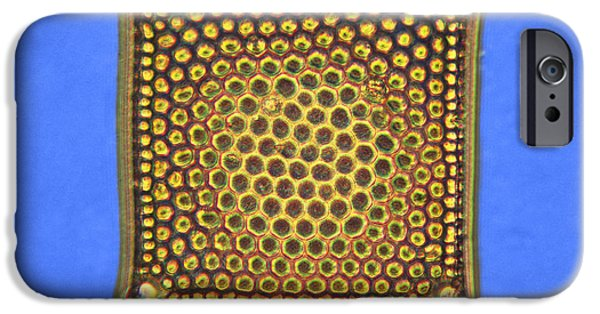 Diatoms iPhone Cases - Diatom - Triceratium iPhone Case by James W. Evarts