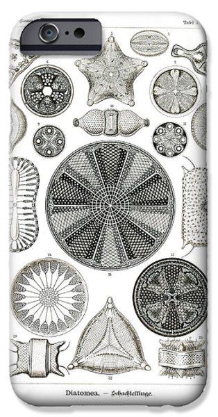 Biddulphia Pulchella iPhone Cases - Diatomea iPhone Case by Splendid Art Prints