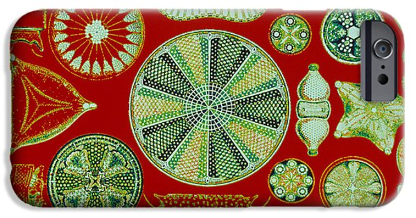 Diatoms iPhone Cases - Diatoms-Ernst Haeckel iPhone Case by Scott Camazine