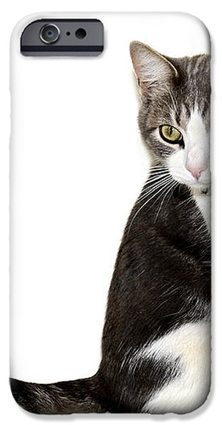 Did I Hear a Mouse iPhone Case by Susan Leggett