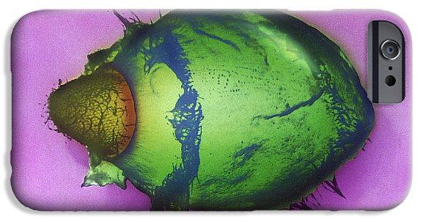 Protozoa iPhone Cases - Didinium SEM iPhone Case by Greg Antipa