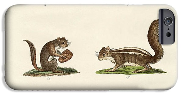 Fox Squirrel iPhone Cases - Different kinds of squirrels iPhone Case by Splendid Art Prints