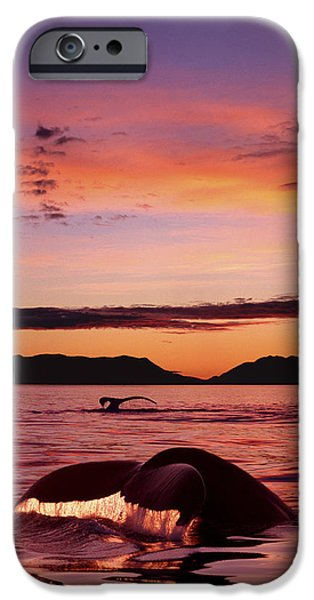Chatham iPhone Cases - Digital Humpback Whale Tails  Sunset Se iPhone Case by John Hyde