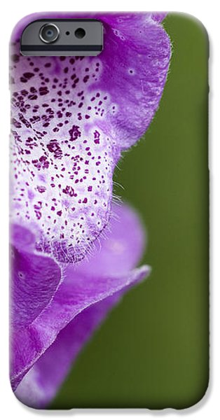 Digitalis Abstract iPhone Case by Anne Gilbert