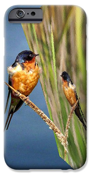 Barn Swallow iPhone Cases - Dimensions - Mirrors in Time iPhone Case by iina  Van Lawick