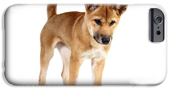 Cute Puppy iPhone Cases - Dingo Puppy iPhone Case by Gerry Pearce