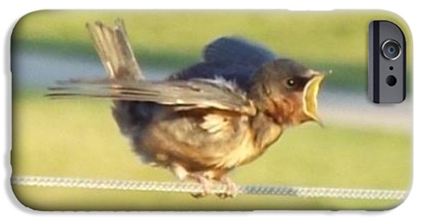 Barn Swallow iPhone Cases - Dinner Bell iPhone Case by Caryl J Bohn