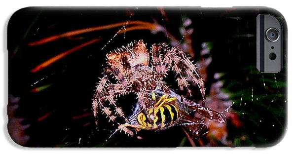 Spider iPhone Cases - Dinner iPhone Case by Joe Hamilton