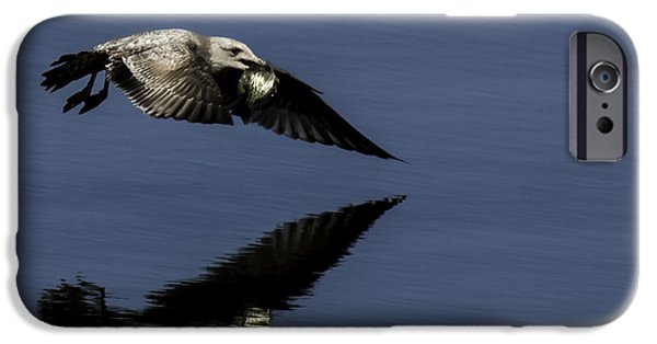 Herring Gull iPhone Cases - Dinner On The Fly iPhone Case by Thomas Young