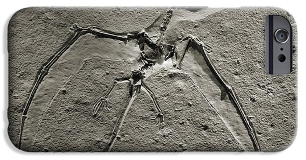 Archaeologists iPhone Cases - Pterodactyl Fossil iPhone Case by Dan Sproul