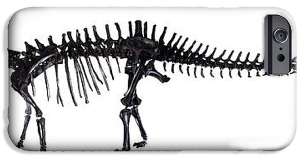 Carnegie Museum iPhone Cases - Diplodocus Dinosaur, Fossil Skeleton iPhone Case by Natural History Museum, London