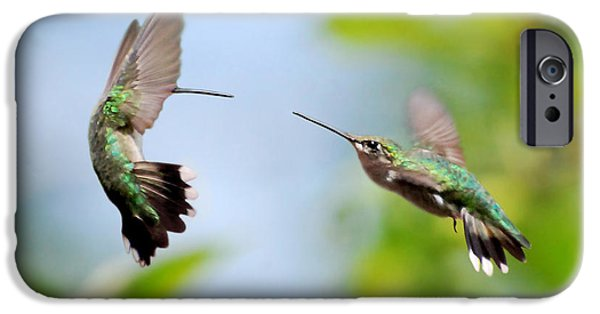 Hummingbird iPhone Cases - Direct Confrontation iPhone Case by Christina Rollo